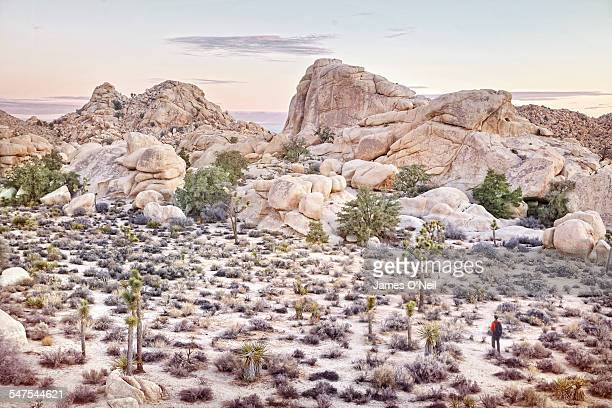a lone traveller in the desert - joshua stock pictures, royalty-free photos & images