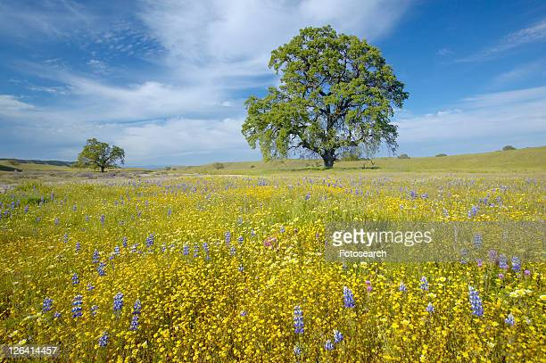 Lone tree and colorful bouquet of spring flowers blossoming
