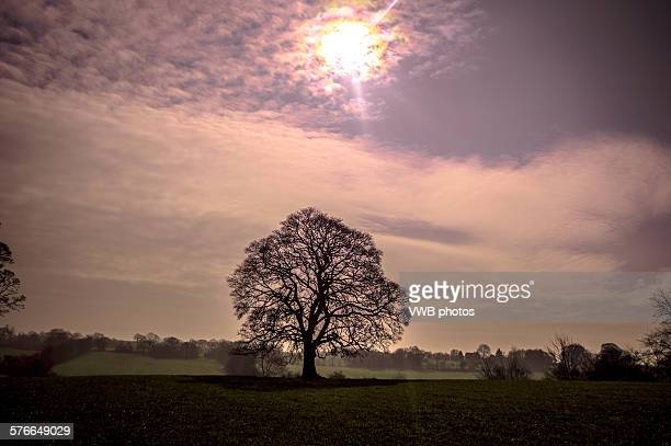 Lone tree and solar eclipse