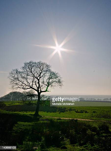 Lone tree and sunflare
