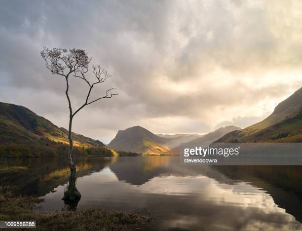 lone tree at buttermere / cumbria - cumbria stock pictures, royalty-free photos & images