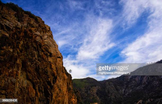 lone tree at cliff's edge - highlywood stock photos and pictures