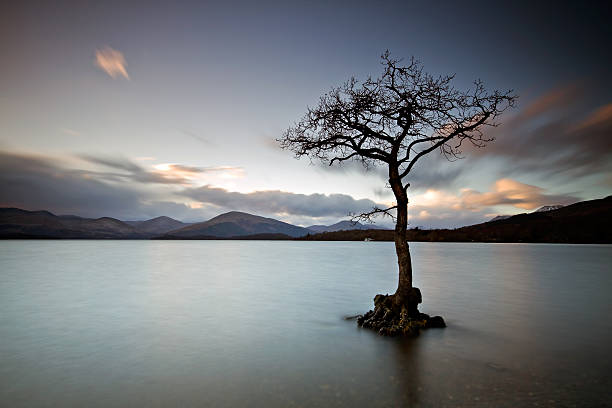 Lone tree at Loch Lomond after sunset