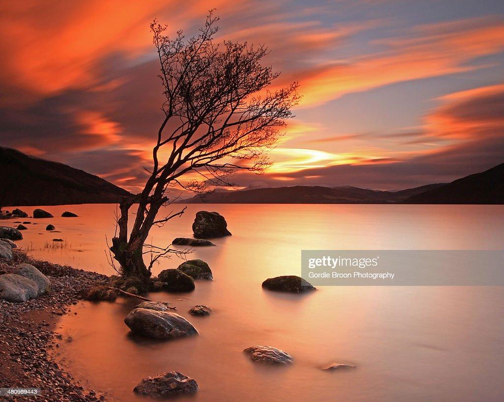 Lone Tree at  Sunset. : Stock Photo
