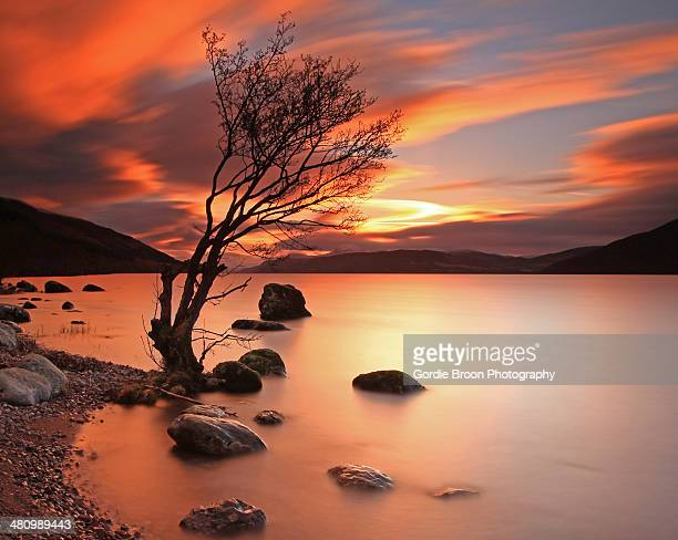 lone tree at  sunset. - loch ness stock photos and pictures