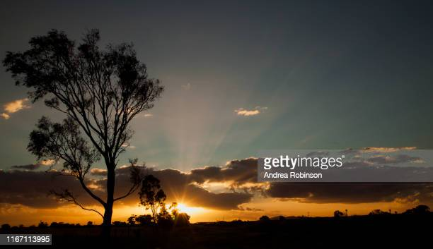 lone tree at sunset with sunburst and dramatic golden cloud near werribee, melbourne, australia - oceania stock pictures, royalty-free photos & images