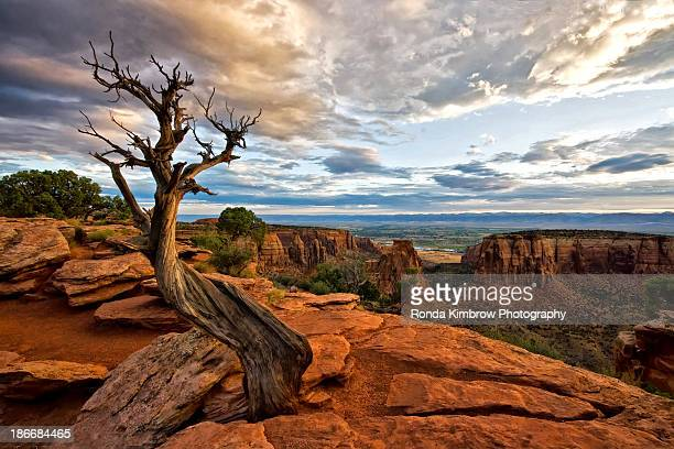 a lone tree at the colorado national monument - grand junction stock-fotos und bilder