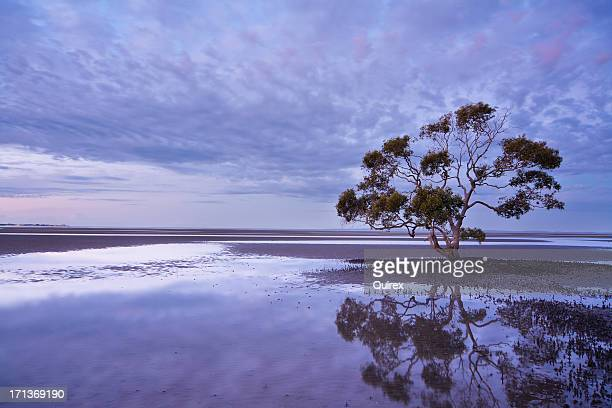 lone tree, australia - mangrove tree stock pictures, royalty-free photos & images