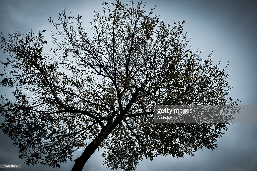 Lone Tree / Background : Stock Photo