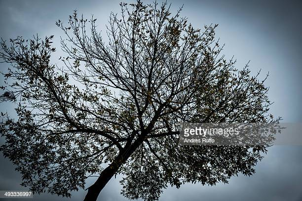 lone tree / background - andres ruffo stock pictures, royalty-free photos & images