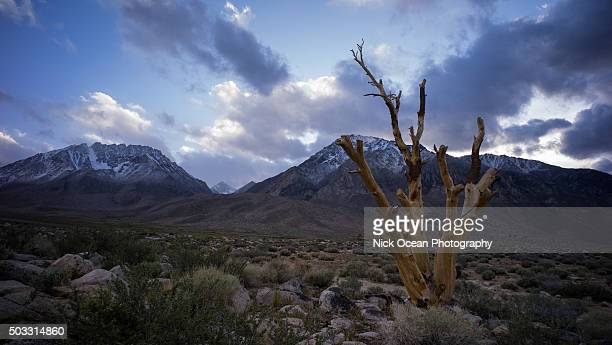 lone tree below the sierras, bishop, ca - stoking stock pictures, royalty-free photos & images