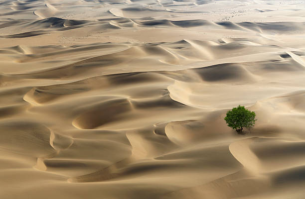 Lone Tree In A Desert Wall Art