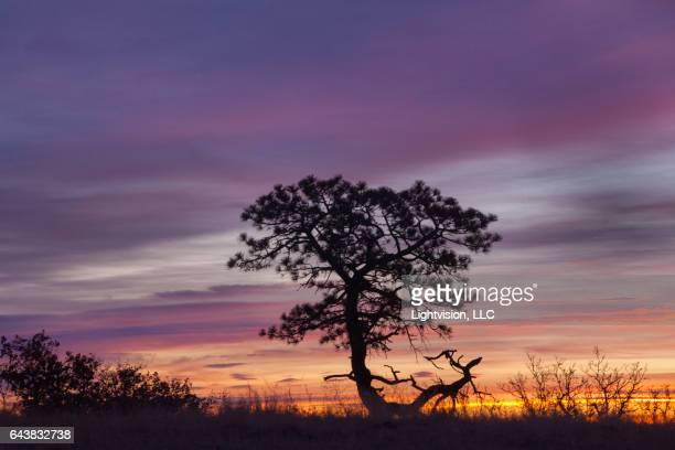 lone tree in castle rock, colorado - castle rock colorado stock pictures, royalty-free photos & images