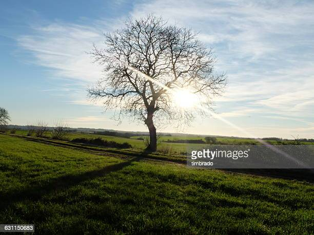 lone tree in field, niort, deux-sevres, france - deux sevres stock photos and pictures