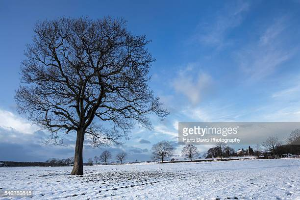lone tree in snowy field, wentworth - south yorkshire stock pictures, royalty-free photos & images