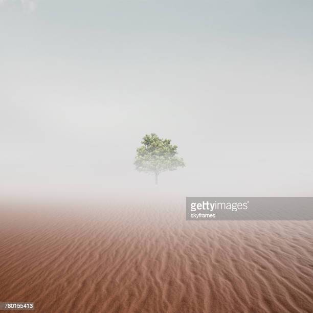 Lone tree in the desert in mist