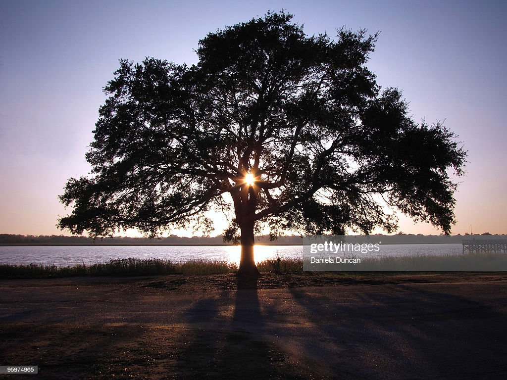 Lone tree in the sunset : Stock Photo