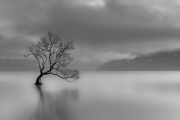 Free black and white nature images pictures and royalty free lone tree lake wanaka new zealand black and white voltagebd Images