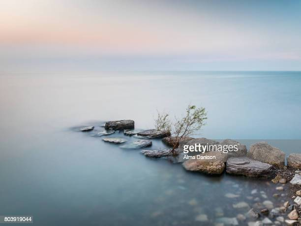 lone tree on crash barrier - lake ontario - alma danison stock photos and pictures