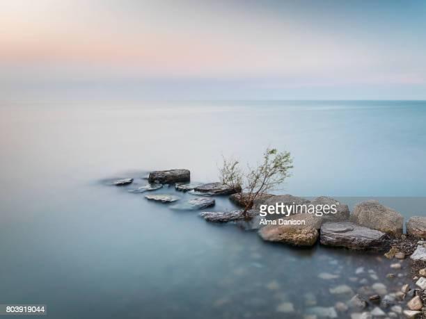 lone tree on crash barrier - lake ontario - lake ontario stock pictures, royalty-free photos & images