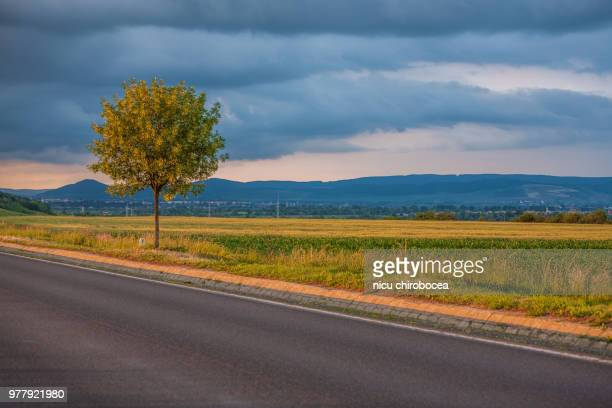 Lone tree on roadside
