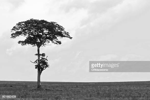 lone tree - crmacedonio stock photos and pictures