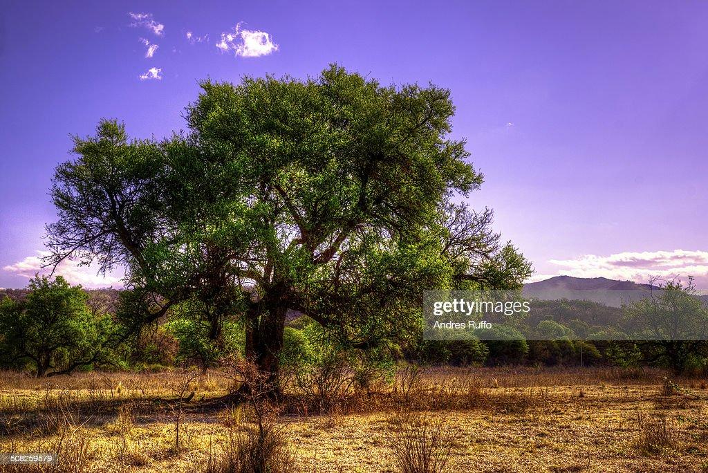 lone Tree : Stock Photo