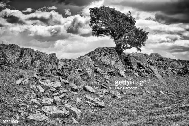lone tree - mike caithness stock pictures, royalty-free photos & images