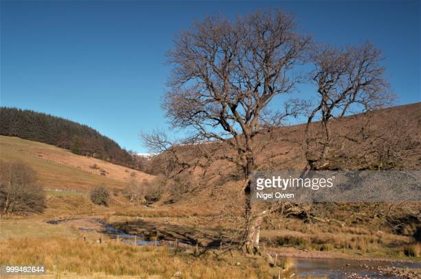 lone tree - nigel owen stock pictures, royalty-free photos & images