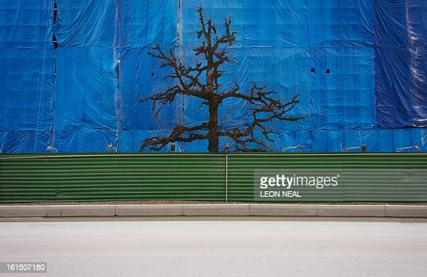 A lone tree rises between a wellused contruction track and the scaffolding cover of an uncompleted building Krasnaya Polyana a site of Sochi 2014...