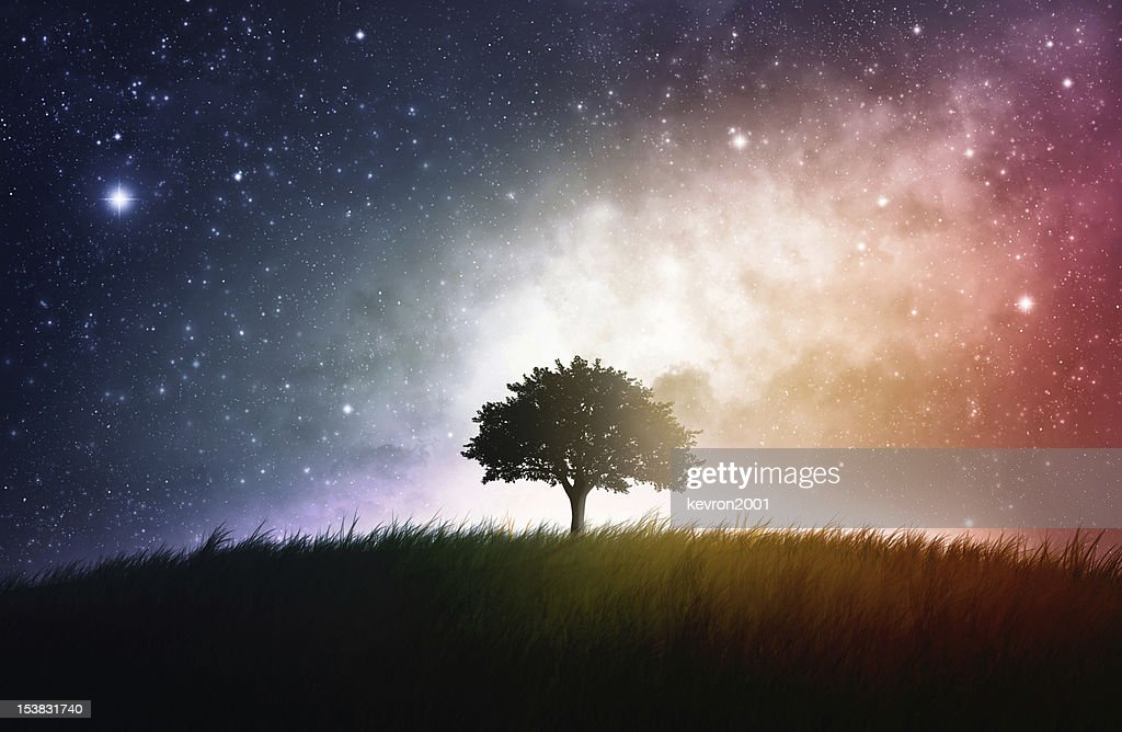 Lone tree silhouette in grassy field with space background : Stock Photo