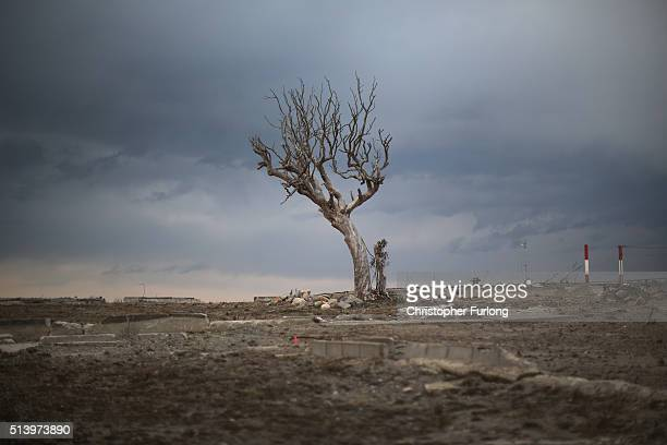 A lone tree sits on the tsunami scarred landscape inside the exclusion zone close to the devastated Fukushima Daiichi Nuclear Power Plant on February...