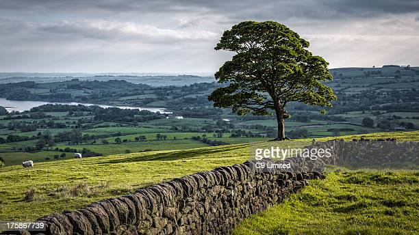 CONTENT] A lone tree standing by a wall in the Peak District National Park The tree is on a hillside with views over the surrounding countryside and...