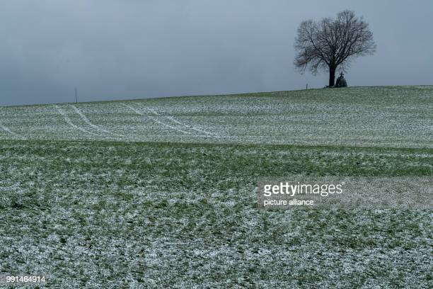 A lone tree standing in front of a field lightly covered with snow near the Upper Bavarian town of Dietramszell Germany 13 November 2017 Photo Peter...