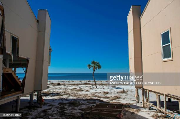 TOPSHOT A lone tree stands between two damaged beach houses in Port St Joe beach Florida on October 13 three days after hurricane Michael hit the...