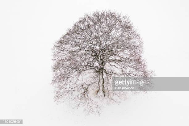 Lone tree stands in a snow covered field on February 08, 2021 near Canterbury, United Kingdom. Heavy snow in Scotland and South East England over...