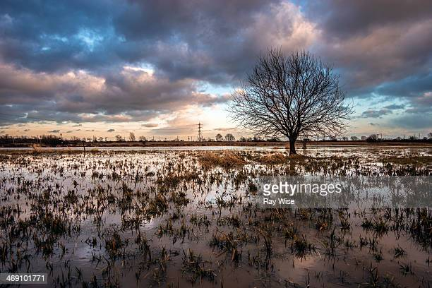 Lone tree stands in flooded marsh land in north London gives a pretty landscape as the watery sky reflects into the flood covered fields.