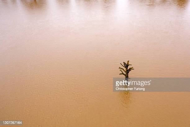 A lone tree stands in floodwater at Worcester racecourse following Storm Dennis on February 19 2020 at Worcester England Storm Dennis is the second...