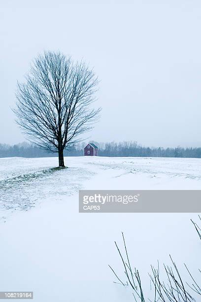 lone tree con fattoria con sfondo di giorno d'inverno - albero spoglio foto e immagini stock