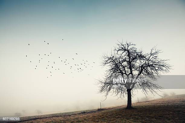 Lone Tree With Group Of Flying Birds