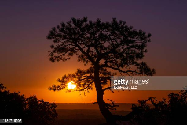 lone tree with rising sun - castle rock colorado stock pictures, royalty-free photos & images