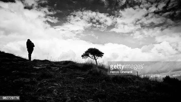 lone walker and tree - renzo gherardi stock photos and pictures