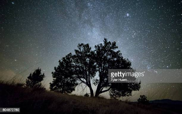 lone western juniper tree and milky way at night sky with stars - western juniper tree stock pictures, royalty-free photos & images