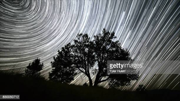 lone western juniper tree night sky star trails over oregon - western juniper tree stock pictures, royalty-free photos & images