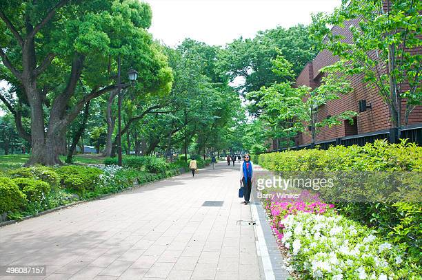 lone woman walking on park path near shrubs - ueno park stock photos and pictures