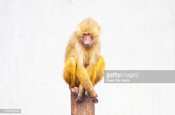 loneliness at the top - esperar stock pictures, royalty-free photos & images