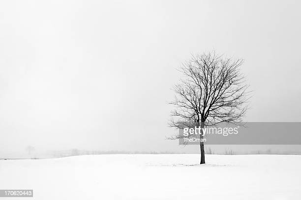 loneliness - bare tree stock pictures, royalty-free photos & images