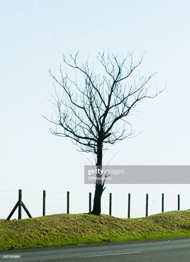 Lonely and naked : Stock Photo