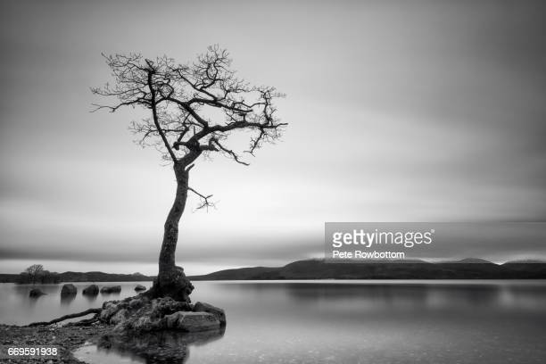 Lonely bare tree