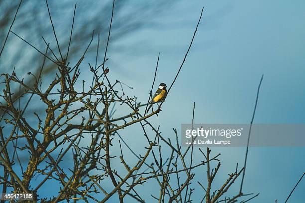 Lonely bird in winter
